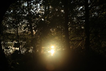 The sun's reflection bursts through the trees
